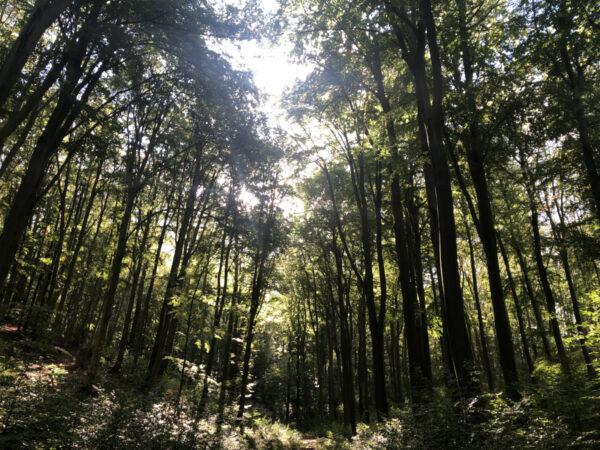 Hohe Schrecke Wald